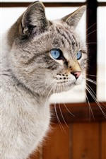 Preview iPhone wallpaper Blue eyes cat, room, window
