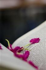 Preview iPhone wallpaper Book, pink petals, hazy