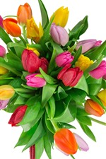 Bouquet, tulips, pink, yellow, red flowers, white background