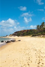 Brasil, praia, coqueiros, mar, costa