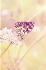 Borboleta, inseto, flores, nebuloso