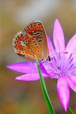 Borboleta, orquídea rosa, pétalas, gotas de água