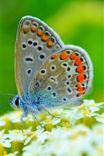 Borboleta, asas, pequenas flores brancas