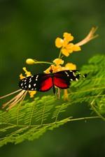 Borboleta, asas, flores amarelas, plantas verdes