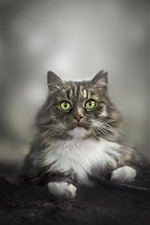 Mirada de gato, ojos verdes, fondo borroso.