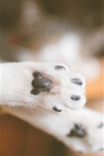Preview iPhone wallpaper Cat paws close-up