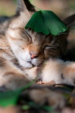 Preview iPhone wallpaper Cat sleeping, green leaf