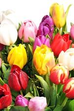 Tulipas coloridas, rosa, branco, amarelo, vermelho