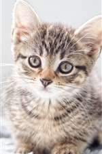 Cute furry kitten look at you