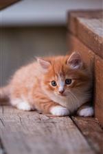 Gatito lindo, escaleras
