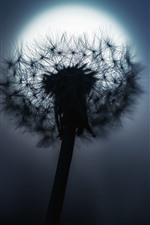 Dandelion, moon, night