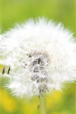 Preview iPhone wallpaper Dandelion, white flower close-up, seeds, wind