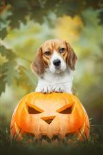 Preview iPhone wallpaper Dog and pumpkin lantern, Halloween