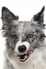 Preview iPhone wallpaper Dog front view, white background