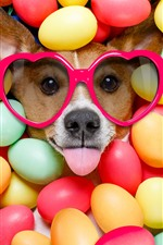 Preview iPhone wallpaper Dog, glasses, colorful balls, funny animal