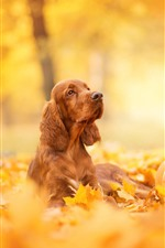 Preview iPhone wallpaper Dog, pumpkin, Halloween, yellow leaves, autumn