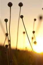 Preview iPhone wallpaper Dry grass, stem, sunset