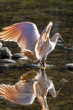 Preview iPhone wallpaper Egret, bird, beak, water, stream, stones