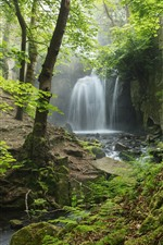 England, Derbyshire, Peak District, waterfall, forest