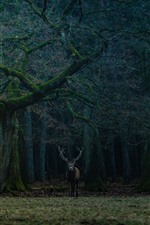 Preview iPhone wallpaper Forest, trees, lonely deer