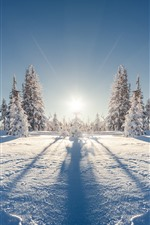 Preview iPhone wallpaper Forest, trees, snow, winter, sunshine, shadow