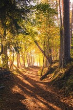 Forest, trees, sun rays, shadow, path