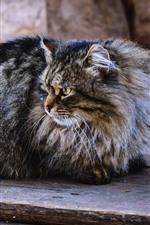 Furry gray kitten look at left side