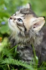 Mirada de gatito peludo, plantas, fondo verde