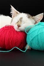 Furry kitten sleeping, wool thread