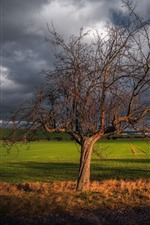 Preview iPhone wallpaper Germany, Thuringia, Haarhausen, lonely trees, fields