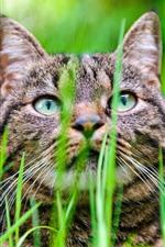 Preview iPhone wallpaper Gray kitten, grass