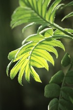 Preview iPhone wallpaper Green fern leaves, sunshine