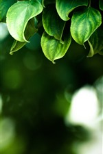 Preview iPhone wallpaper Green leaves, hazy background, spring