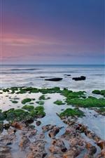 Preview iPhone wallpaper Green moss, reefs, sea