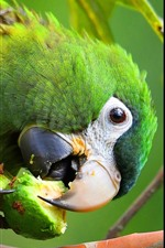 Preview iPhone wallpaper Green parrot eat fruit