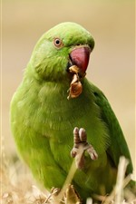 Preview iPhone wallpaper Green parrot, ground