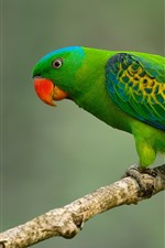 Green parrot, tail, tree branch