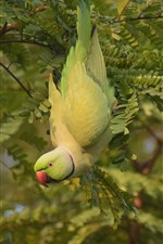 Preview iPhone wallpaper Green parrot, tree, leaves