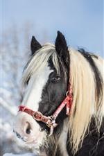 Cavalo, cabeça, olhos, juba, neve, inverno