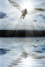 Preview iPhone wallpaper Lake, clouds, dove, sun rays
