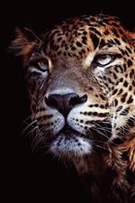 Preview iPhone wallpaper Leopard, face, black background