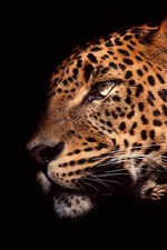 Preview iPhone wallpaper Leopard side view, head, black background