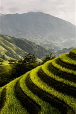 Preview iPhone wallpaper Longsheng Rice Terrace, countryside, mountains, green, fog, morning