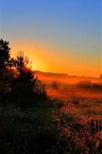 Preview iPhone wallpaper Morning, trees, grass, fog, dawn, sunrise
