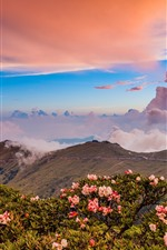 Montanhas, flores cor de rosa, nuvens, crepúsculo