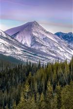 Montañas, árboles, nieve, Paisaje invernal