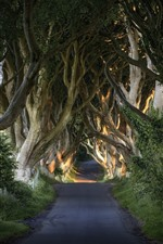 Preview iPhone wallpaper Oak trees, road, tunnel