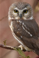 Preview iPhone wallpaper Owl look back, twigs, hazy