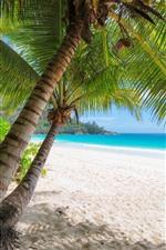 Palmeiras, praia, mar, tropical, verão