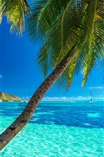 Preview iPhone wallpaper Palm trees, blue sea, summer